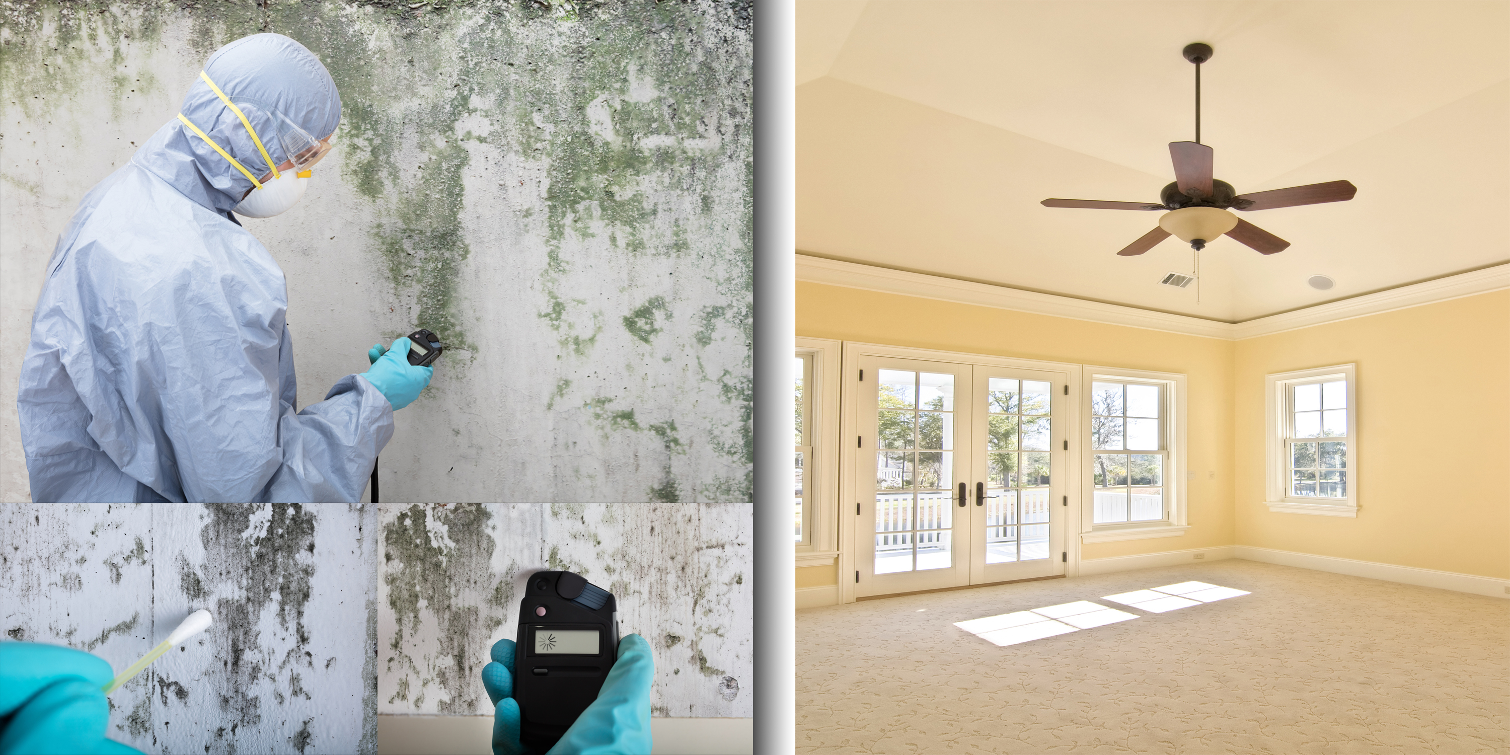 Mold Inspection Best Mold Remediation Orlando Central Florida