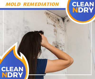 Mold Inspection, Mold Cleanup, Mold Restoration Orlando