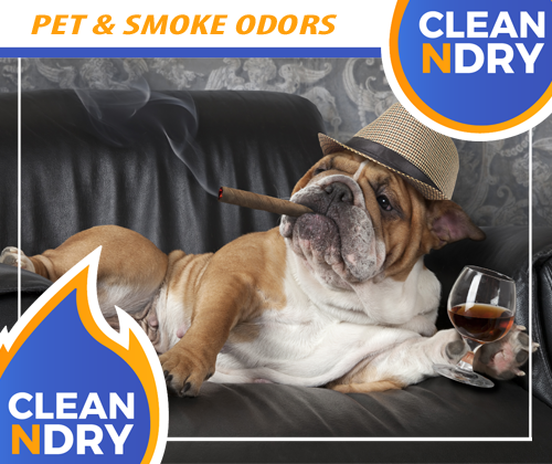 PET ODOR SMOKE ODOR