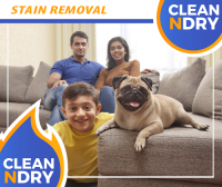 STAIN REMOVAL PET STAINS