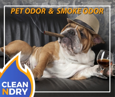 PET-ODOR-CLEAN SMOKE-ODOR-CONVERSION-01