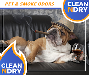 PET-AND-SMOKE-ODORS-Removal
