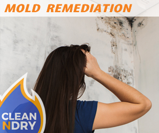 mold-remediation-orlando